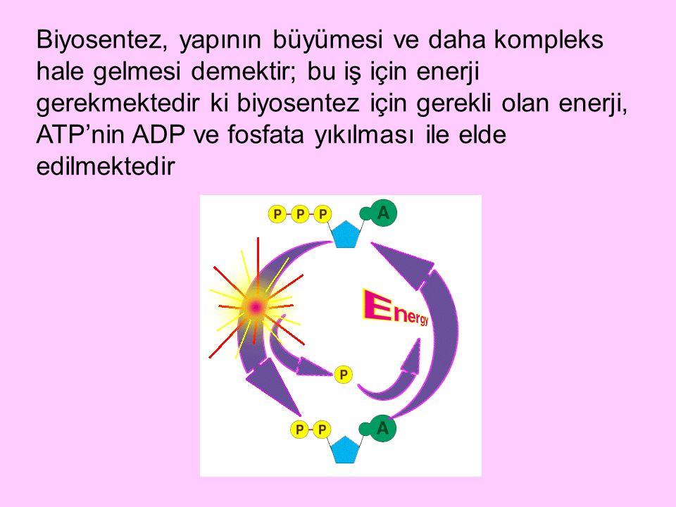 Biyosentez, yapının büyümesi ve daha kompleks hale gelmesi demektir; bu iş için enerji gerekmektedir ki biyosentez için gerekli olan enerji, ATP'nin A