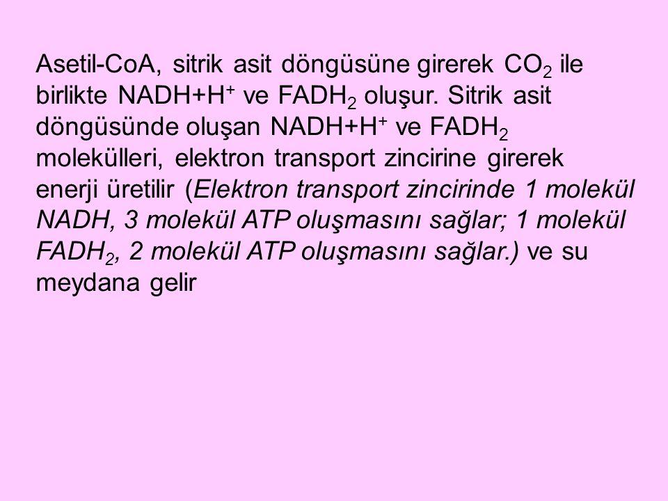 Asetil-CoA, sitrik asit döngüsüne girerek CO 2 ile birlikte NADH+H + ve FADH 2 oluşur. Sitrik asit döngüsünde oluşan NADH+H + ve FADH 2 molekülleri, e