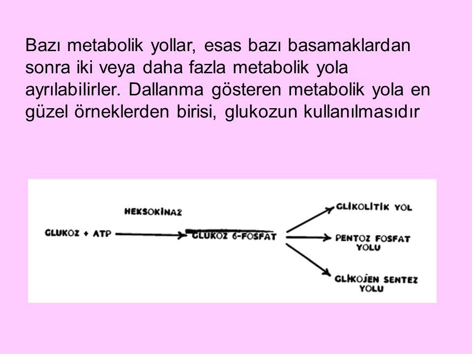 Bazı metabolik yollar, esas bazı basamaklardan sonra iki veya daha fazla metabolik yola ayrılabilirler. Dallanma gösteren metabolik yola en güzel örne
