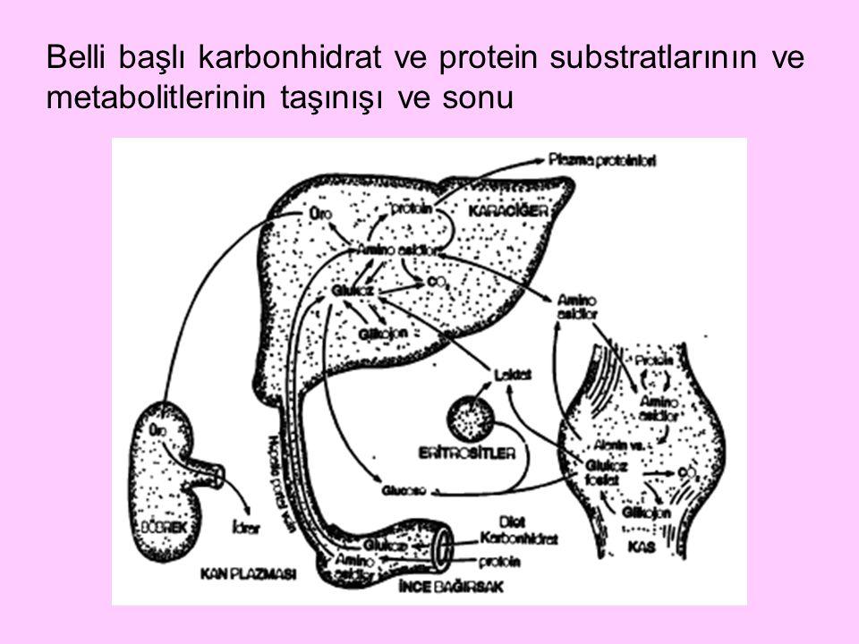 Belli başlı karbonhidrat ve protein substratlarının ve metabolitlerinin taşınışı ve sonu