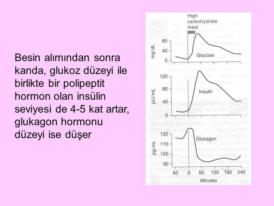 Besin alımından sonra kanda, glukoz düzeyi ile birlikte bir polipeptit hormon olan insülin seviyesi de 4-5 kat artar, glukagon hormonu düzeyi ise düşe