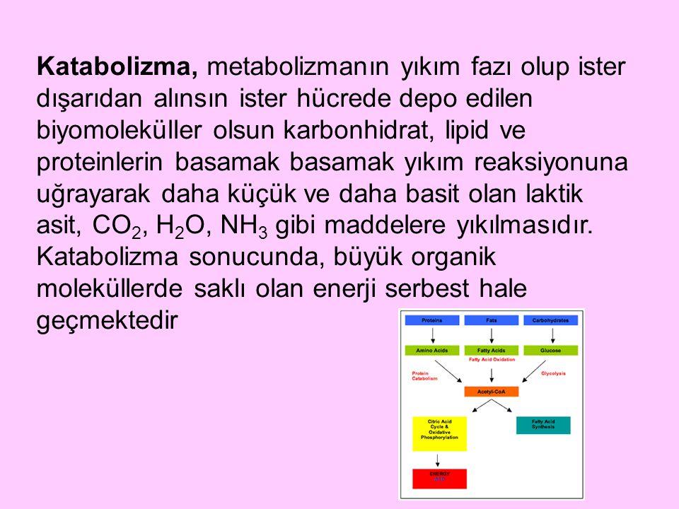 Katabolizma, metabolizmanın yıkım fazı olup ister dışarıdan alınsın ister hücrede depo edilen biyomoleküller olsun karbonhidrat, lipid ve proteinlerin