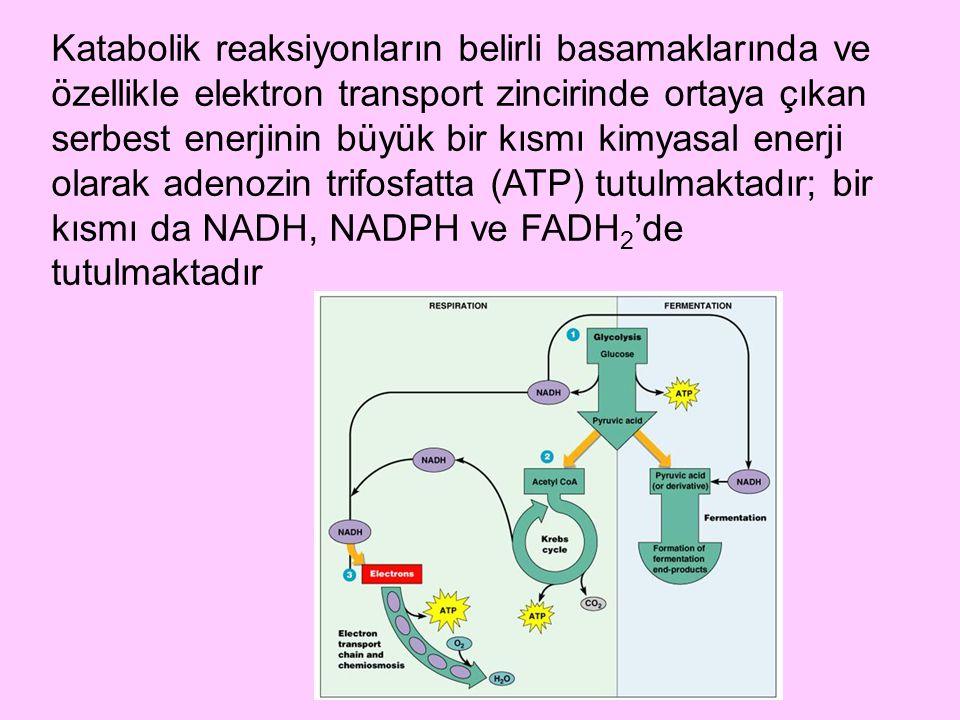 Katabolik reaksiyonların belirli basamaklarında ve özellikle elektron transport zincirinde ortaya çıkan serbest enerjinin büyük bir kısmı kimyasal ene