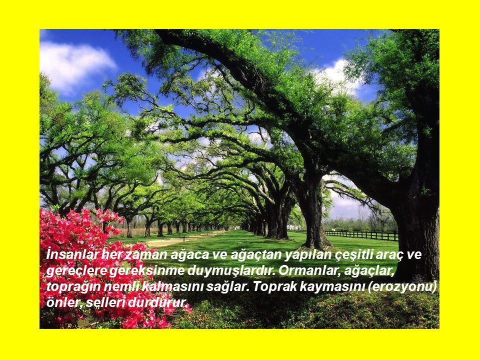İnsanlar her zaman ağaca ve ağaçtan yapılan çeşitli araç ve gereçlere gereksinme duymuşlardır. Ormanlar, ağaçlar, toprağın nemli kalmasını sağlar. Top