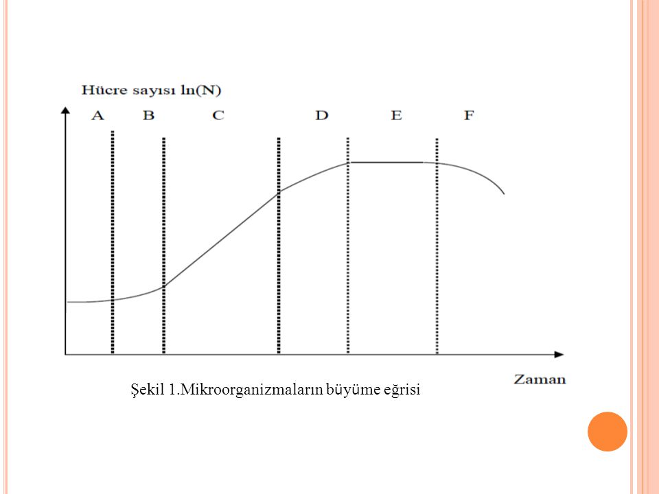 Şekil 1.Mikroorganizmaların b ü y ü me eğrisi