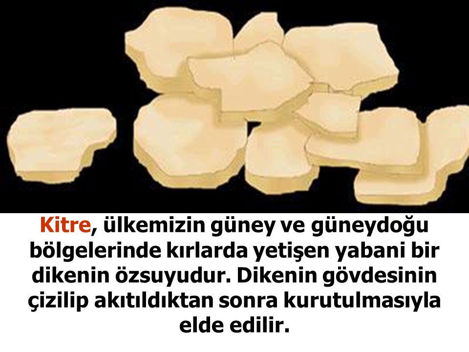 Osmanlı ilim adamları meclisi