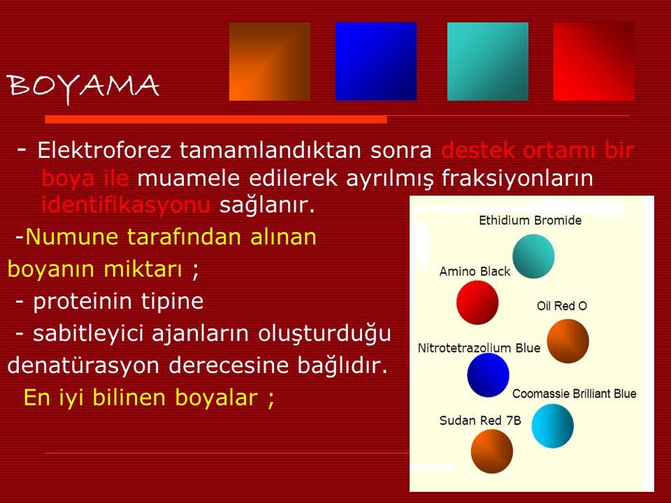 BOYAMA - Elektroforez tamamlandıktan sonra destek ortamı bir boya ile muamele edilerek ayrılmış fraksiyonların identifikasyonu sağlanır.