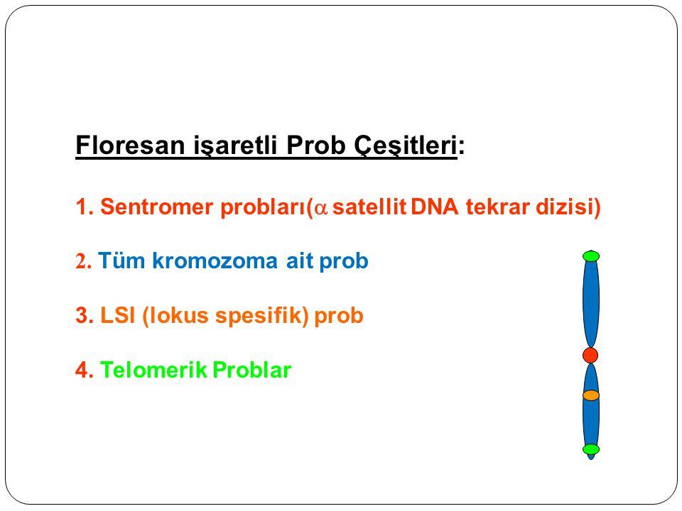 Floresan işaretli Prob Çeşitleri: 1.Sentromer probları(  satellit DNA tekrar dizisi) 2.