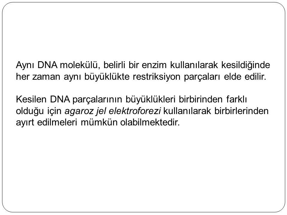 Aynı DNA molekülü, belirli bir enzim kullanılarak kesildiğinde her zaman aynı büyüklükte restriksiyon parçaları elde edilir. Kesilen DNA parçalarının