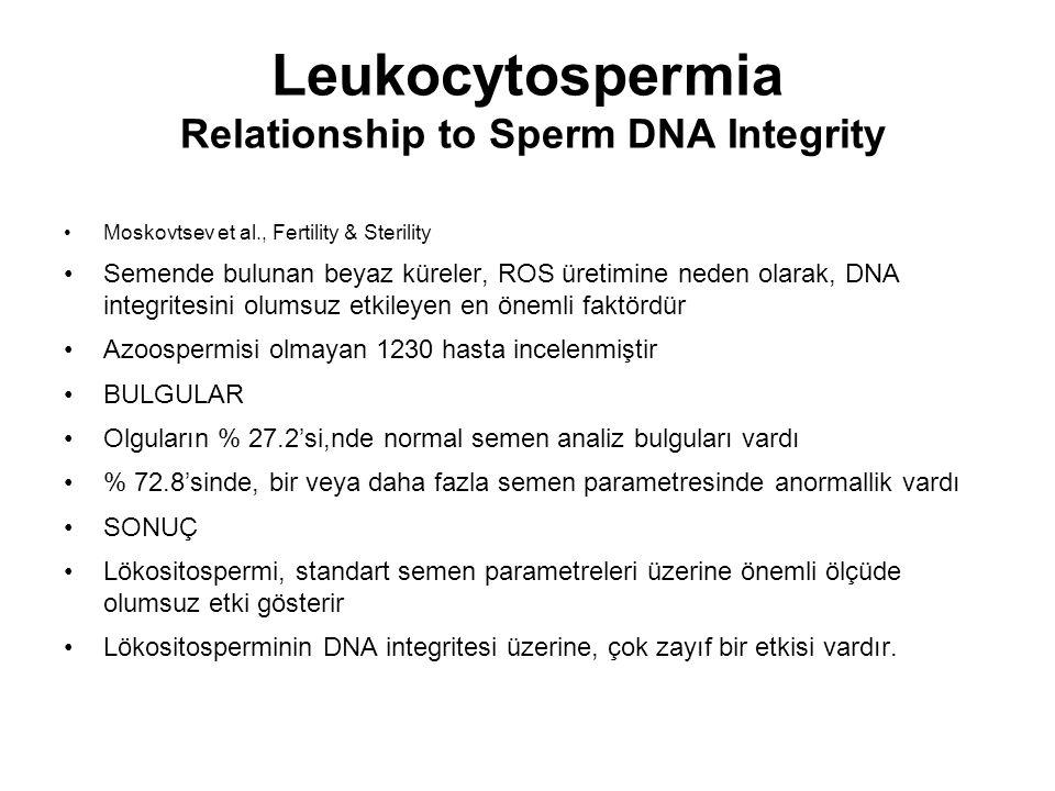 Leukocytospermia Relationship to Sperm DNA Integrity Moskovtsev et al., Fertility & Sterility Semende bulunan beyaz küreler, ROS üretimine neden olara