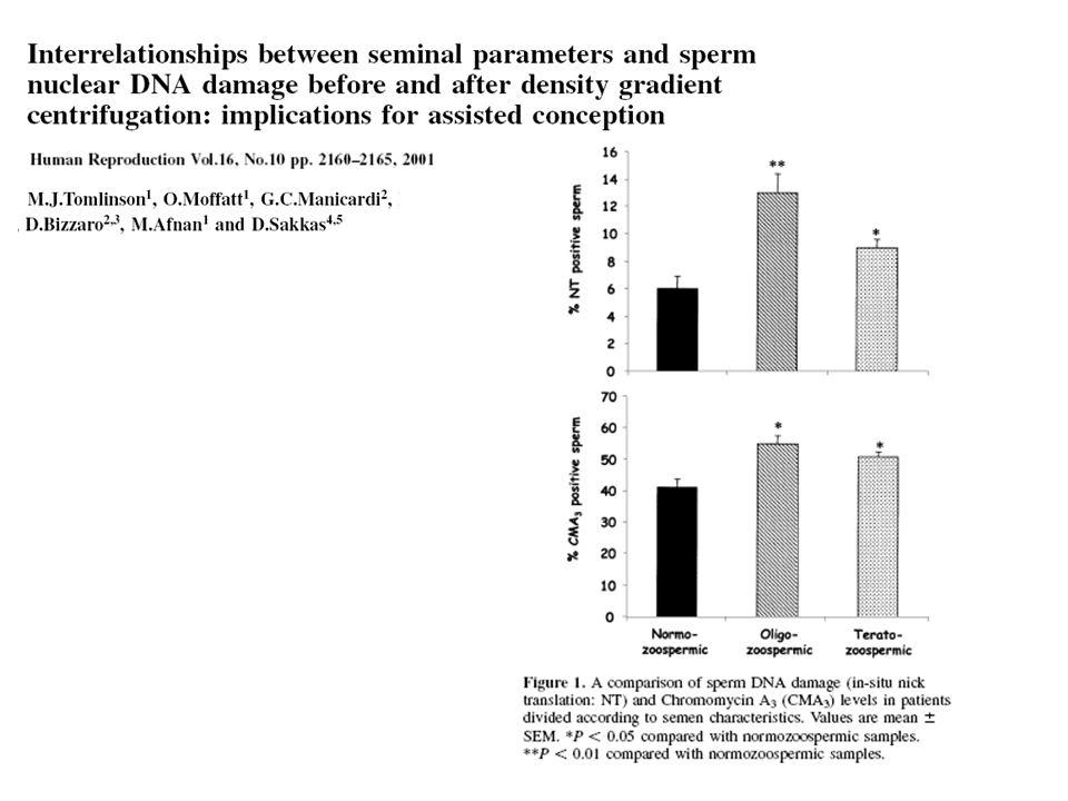 BULGULAR : Ejaküle ve hazırlanmış semen örneklerinde sperm kromatin dağılımı sperm motilitesi ile negatif korelasyon gösterdi.