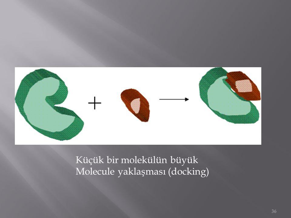 36 Küçük bir molekülün büyük Molecule yaklaşması (docking)