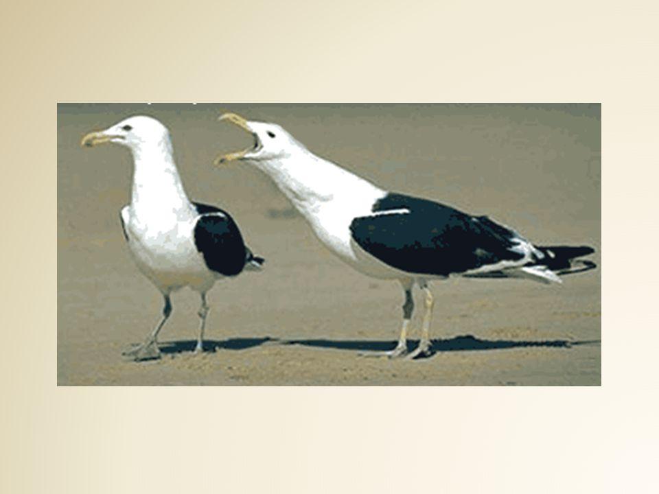 Ornitologlara kalırsa tüylerin rengi, dizilişi, gaga yapısı, gövde büyüklüğü ve benzeri pek çok detayın kuşun doğal yaşam alanında uzunca incelenmesi