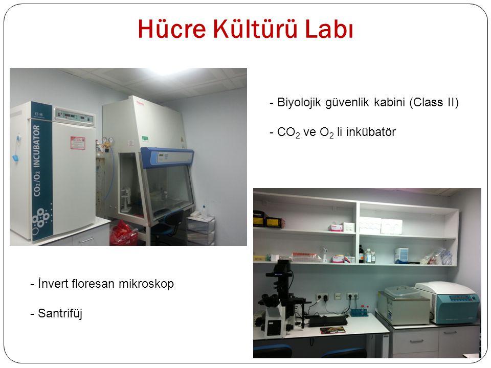 Hücre Kültürü Labı - İnvert floresan mikroskop - Santrifüj - Biyolojik güvenlik kabini (Class II) - CO 2 ve O 2 li inkübatör
