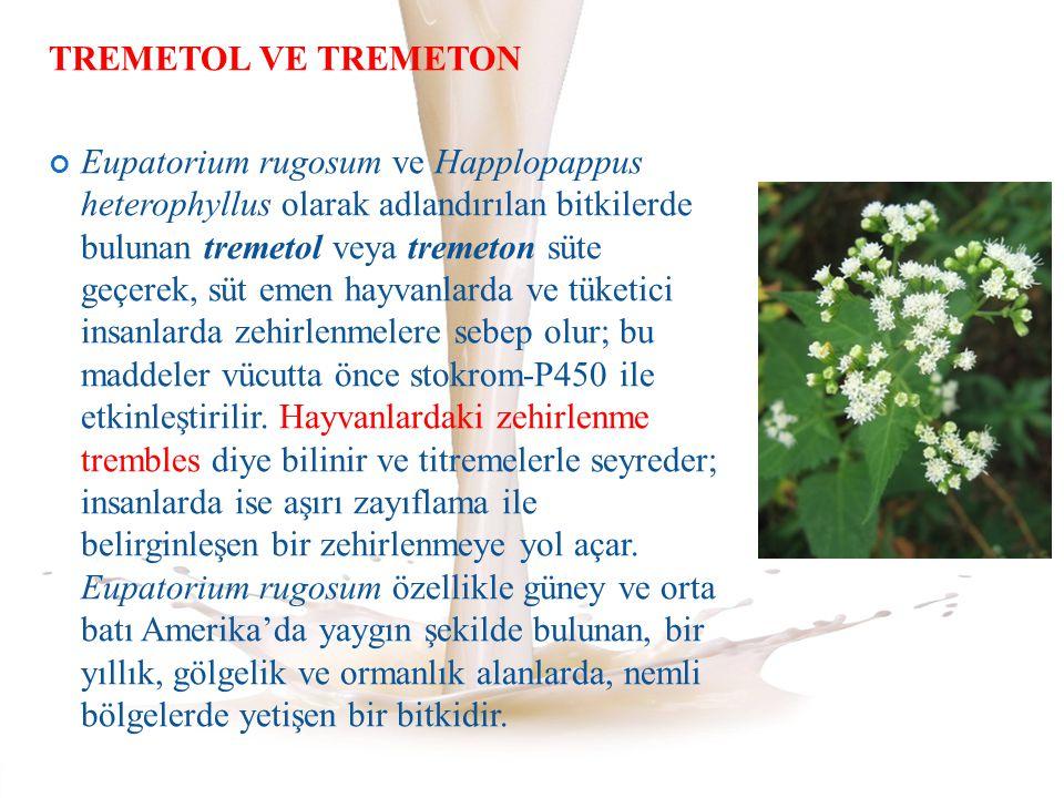 TREMETOL VE TREMETON Eupatorium rugosum ve Happlopappus heterophyllus olarak adlandırılan bitkilerde bulunan tremetol veya tremeton süte geçerek, süt