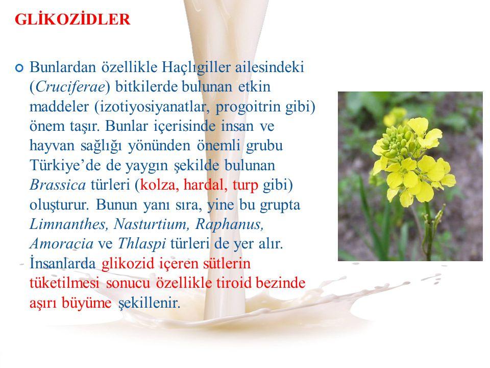 GLİKOZİDLER Bunlardan özellikle Haçlıgiller ailesindeki (Cruciferae) bitkilerde bulunan etkin maddeler (izotiyosiyanatlar, progoitrin gibi) önem taşır