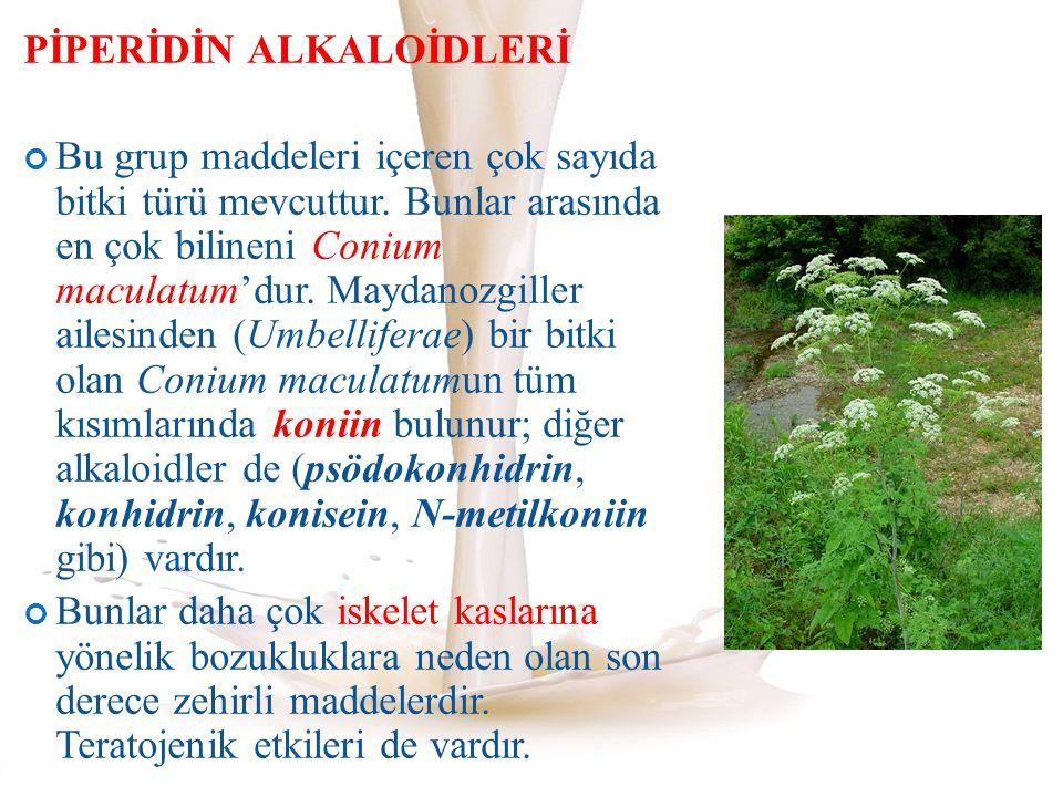 PİPERİDİN ALKALOİDLERİ Bu grup maddeleri içeren çok sayıda bitki türü mevcuttur. Bunlar arasında en çok bilineni Conium maculatum'dur. Maydanozgiller