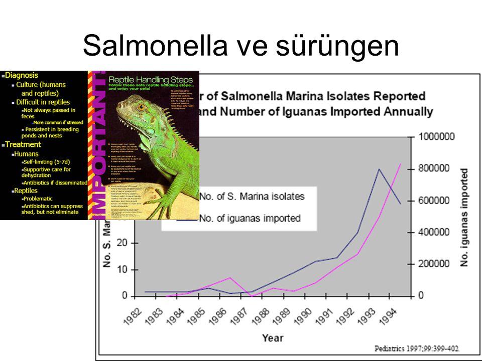 Salmonella ve sürüngen