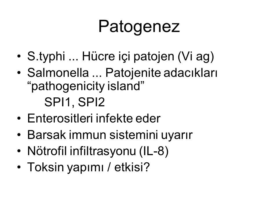 "Patogenez S.typhi... Hücre içi patojen (Vi ag) Salmonella... Patojenite adacıkları ""pathogenicity island"" SPI1, SPI2 Enterositleri infekte eder Barsak"