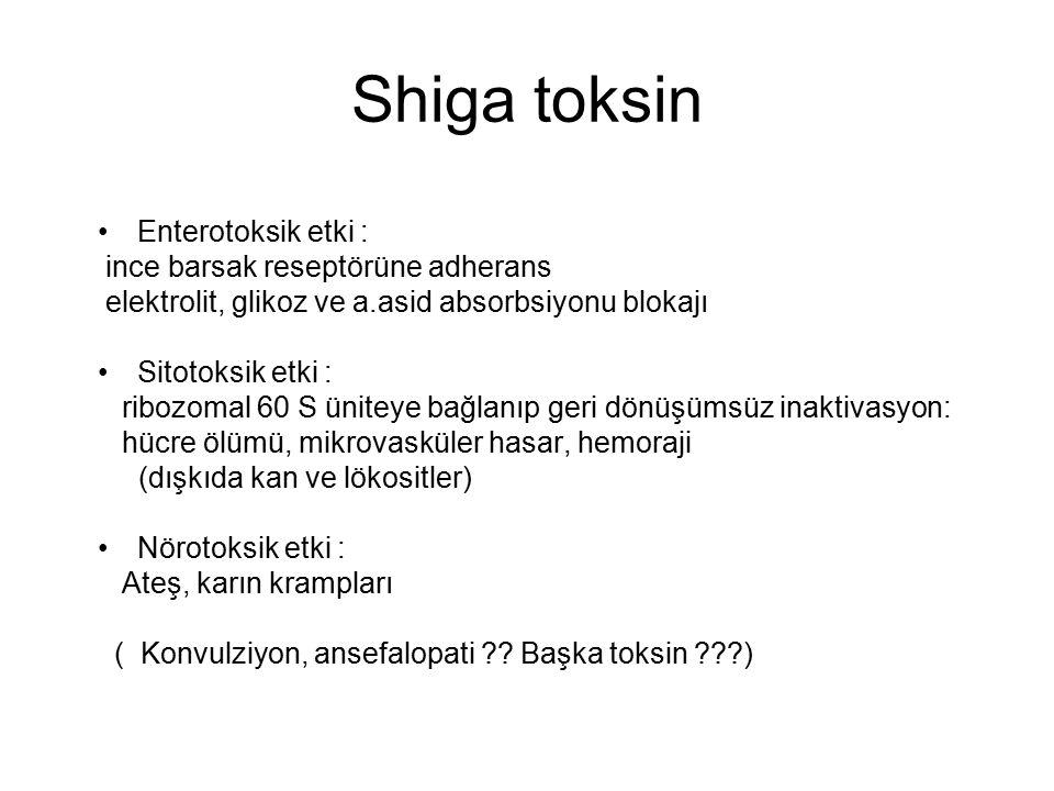Shiga toksin Enterotoksik etki : ince barsak reseptörüne adherans elektrolit, glikoz ve a.asid absorbsiyonu blokajı Sitotoksik etki : ribozomal 60 S ü