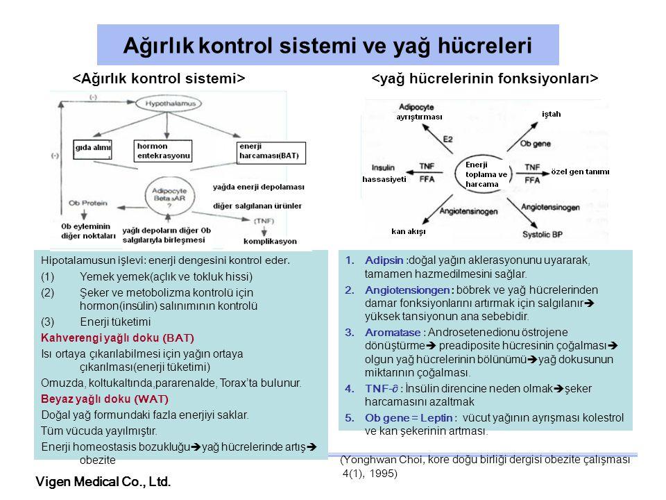 Vigen Medical Co., Ltd. Ağırlık kontrol sistemi ve yağ hücreleri Hipotalamusun işlevi: enerji dengesini kontrol eder. (1)Yemek yemek(açlık ve tokluk h