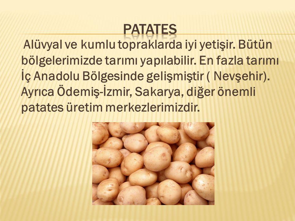 Alüvyal ve kumlu topraklarda iyi yetişir.Bütün bölgelerimizde tarımı yapılabilir.