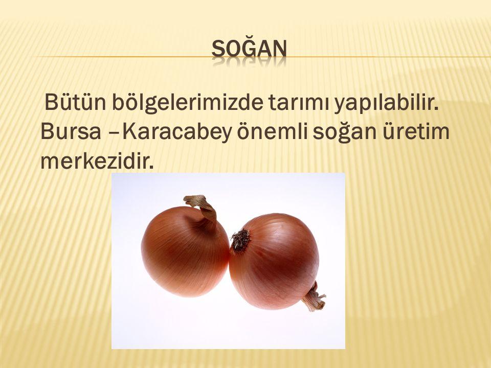 Bütün bölgelerimizde tarımı yapılabilir. Bursa –Karacabey önemli soğan üretim merkezidir.