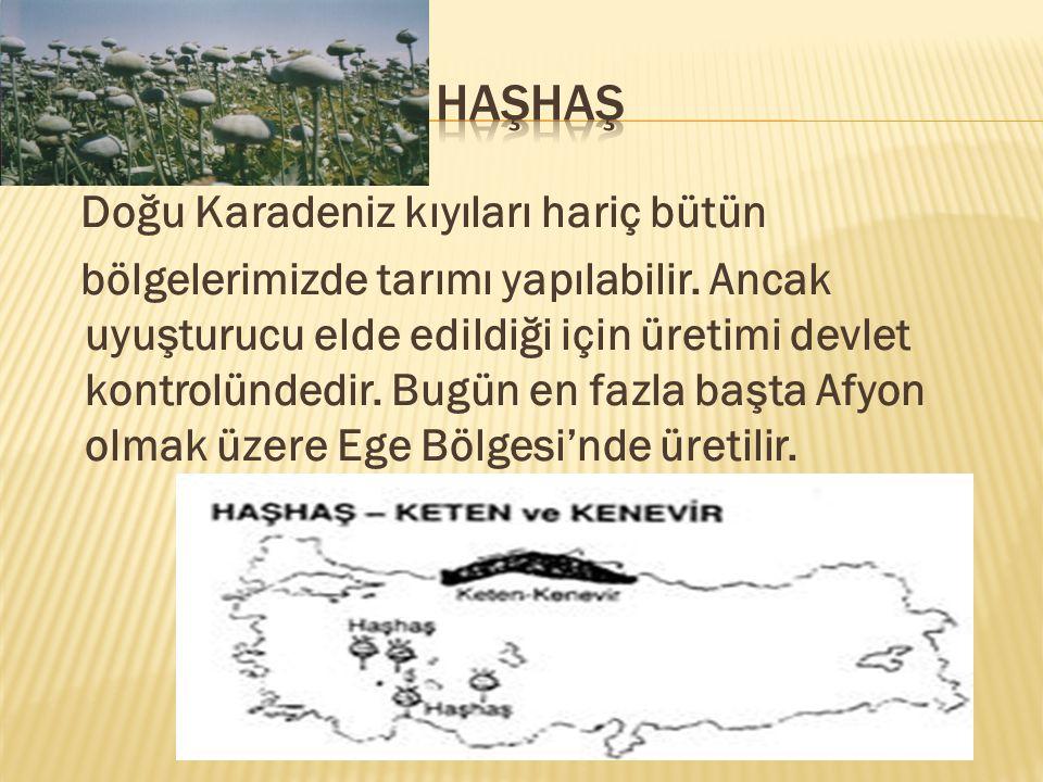 Doğu Karadeniz kıyıları hariç bütün bölgelerimizde tarımı yapılabilir.