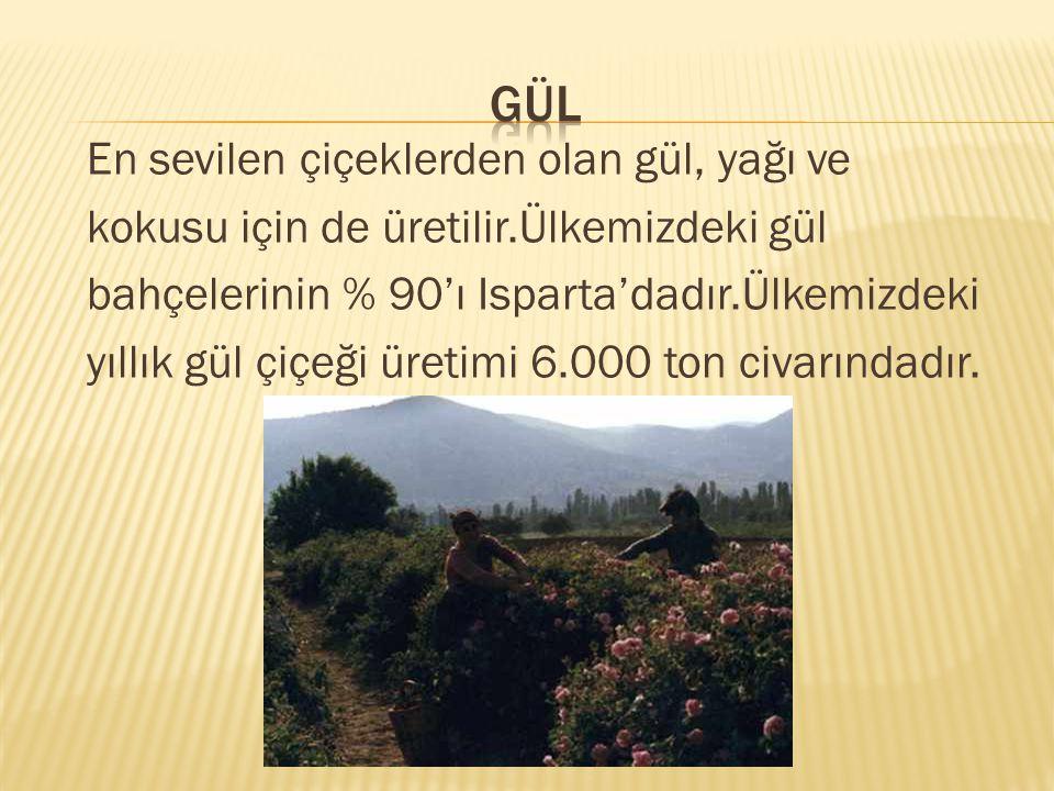 En sevilen çiçeklerden olan gül, yağı ve kokusu için de üretilir.Ülkemizdeki gül bahçelerinin % 90'ı Isparta'dadır.Ülkemizdeki yıllık gül çiçeği üretimi 6.000 ton civarındadır.