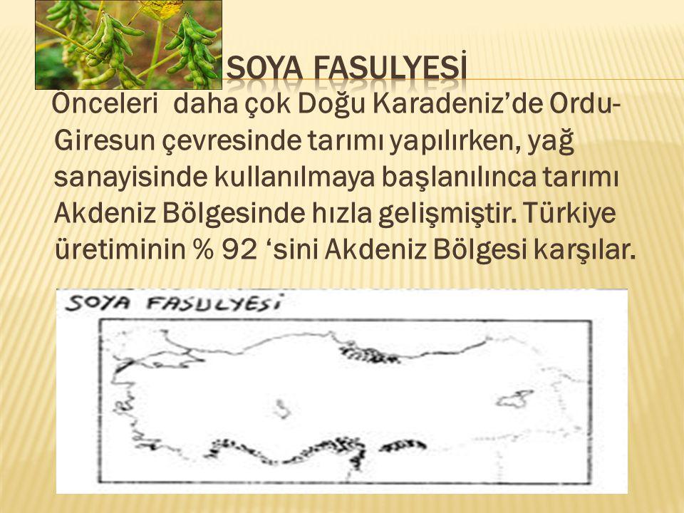 Önceleri daha çok Doğu Karadeniz'de Ordu- Giresun çevresinde tarımı yapılırken, yağ sanayisinde kullanılmaya başlanılınca tarımı Akdeniz Bölgesinde hızla gelişmiştir.