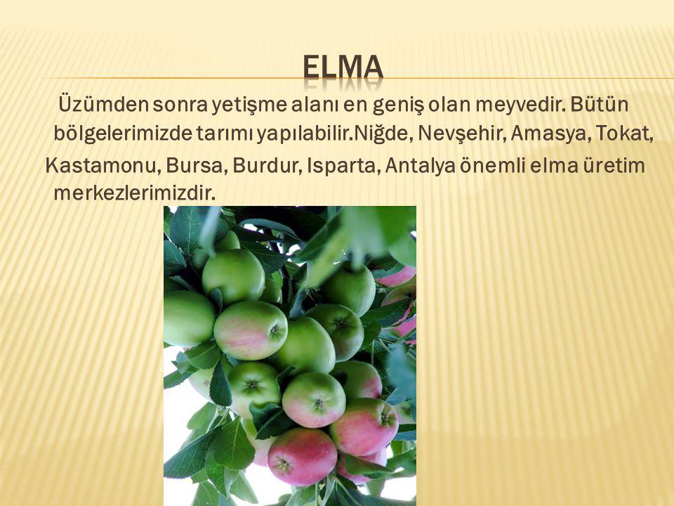 Üzümden sonra yetişme alanı en geniş olan meyvedir.