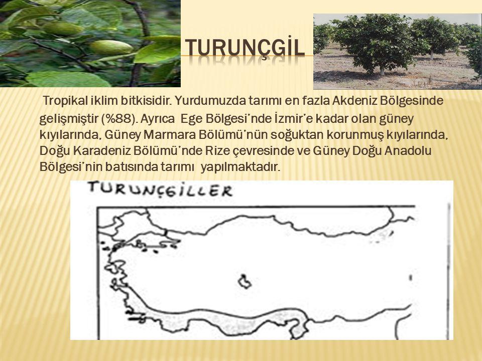 Tropikal iklim bitkisidir.Yurdumuzda tarımı en fazla Akdeniz Bölgesinde gelişmiştir (%88).