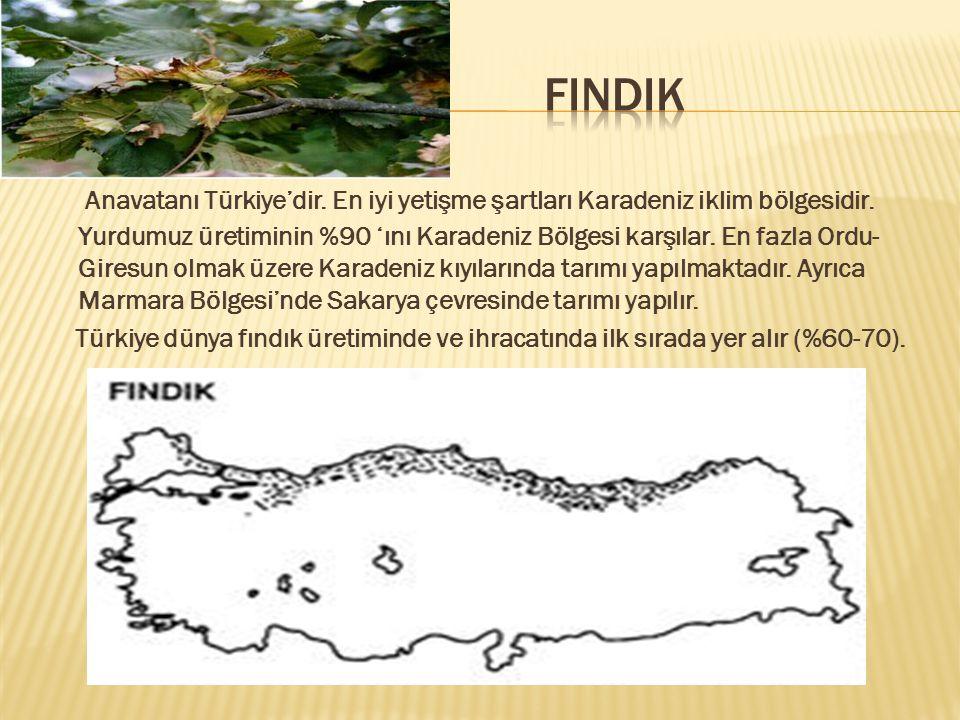 Anavatanı Türkiye'dir.En iyi yetişme şartları Karadeniz iklim bölgesidir.