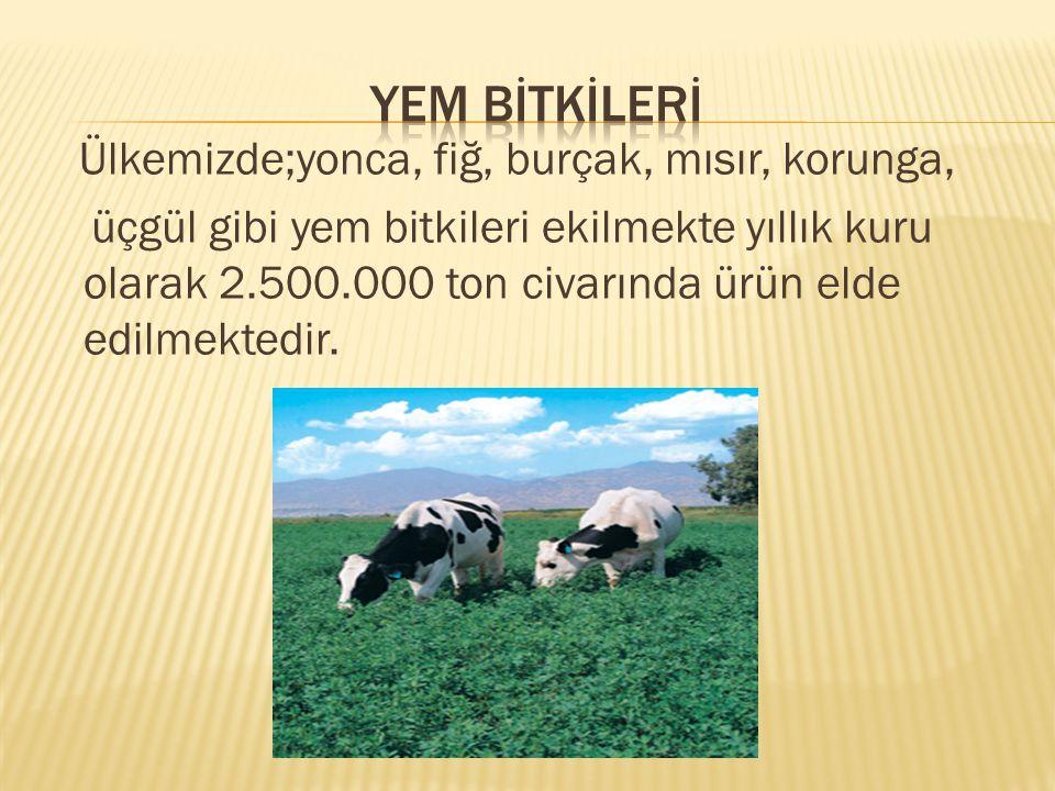 Ülkemizde;yonca, fiğ, burçak, mısır, korunga, üçgül gibi yem bitkileri ekilmekte yıllık kuru olarak 2.500.000 ton civarında ürün elde edilmektedir.