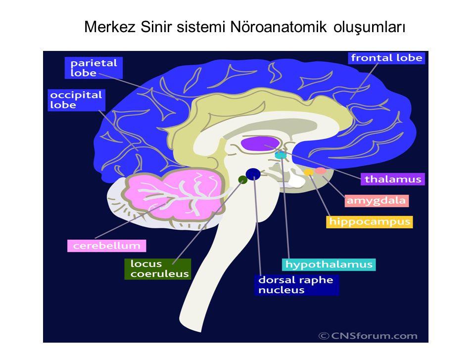 Merkez Sinir sistemi Nöroanatomik oluşumları