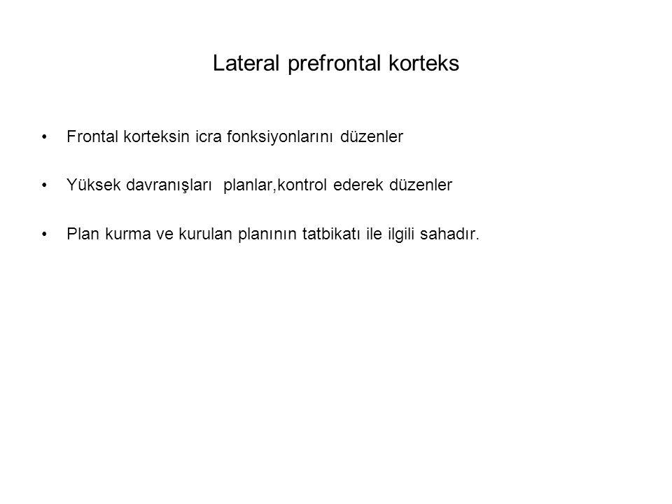 Lateral prefrontal korteks Frontal korteksin icra fonksiyonlarını düzenler Yüksek davranışları planlar,kontrol ederek düzenler Plan kurma ve kurulan p
