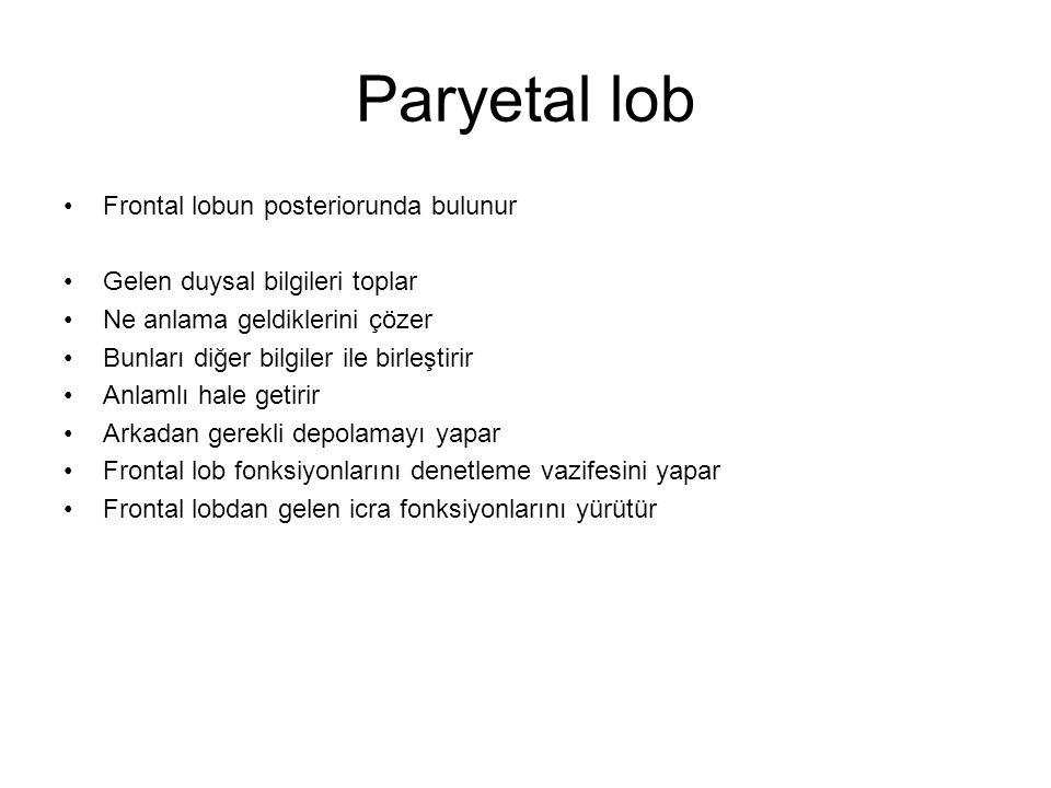 Paryetal lob Frontal lobun posteriorunda bulunur Gelen duysal bilgileri toplar Ne anlama geldiklerini çözer Bunları diğer bilgiler ile birleştirir Anl
