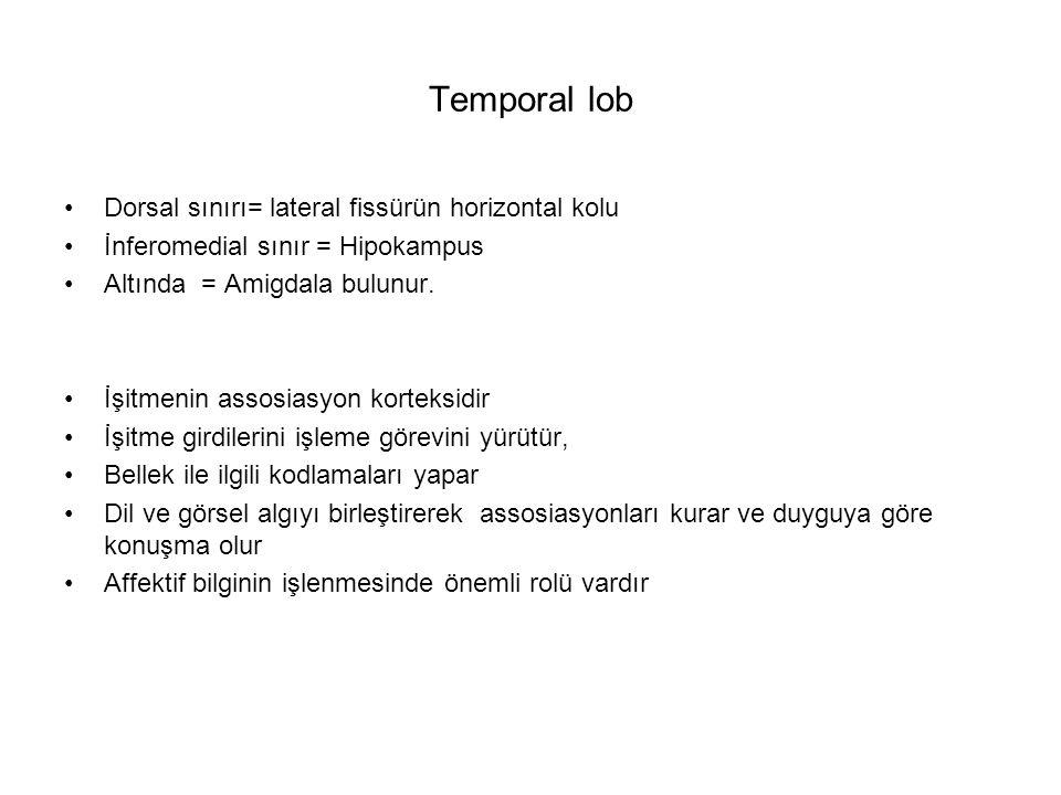Temporal lob Dorsal sınırı= lateral fissürün horizontal kolu İnferomedial sınır = Hipokampus Altında = Amigdala bulunur. İşitmenin assosiasyon korteks