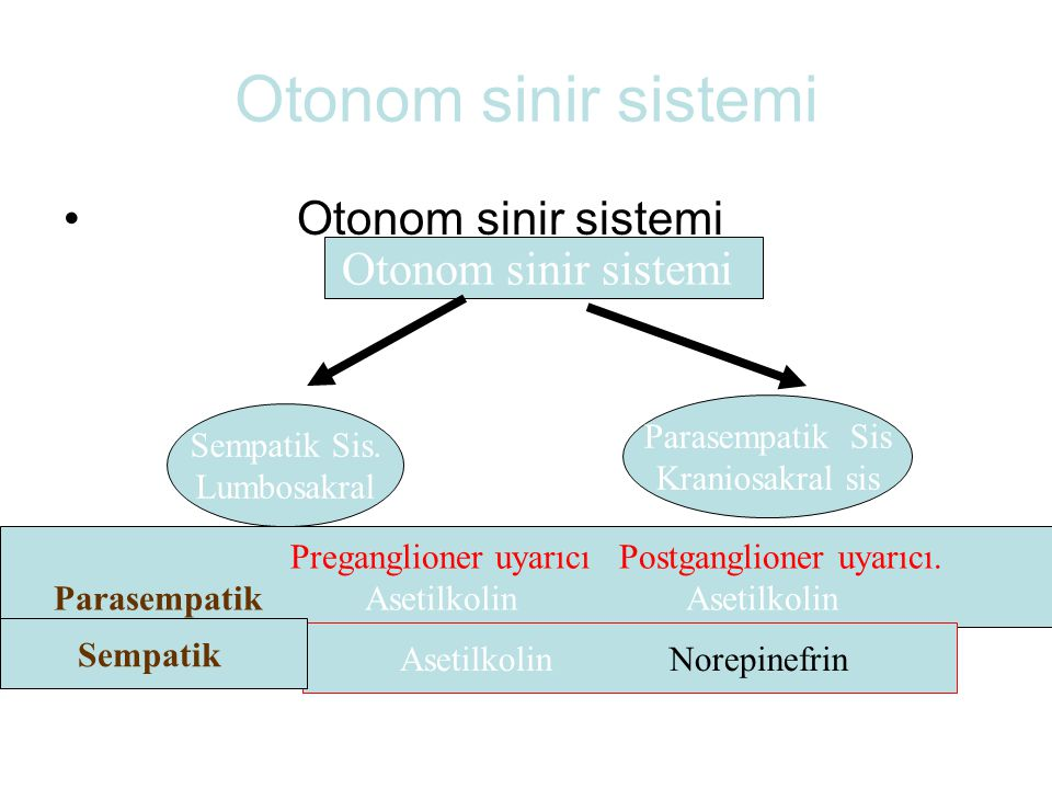 Otonom sinir sistemi Sempatik Sis. Lumbosakral Parasempatik Sis Kraniosakral sis Preganglioner uyarıcı Postganglioner uyarıcı. Parasempatik Asetilkoli