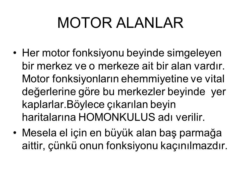 MOTOR ALANLAR Her motor fonksiyonu beyinde simgeleyen bir merkez ve o merkeze ait bir alan vardır. Motor fonksiyonların ehemmiyetine ve vital değerler
