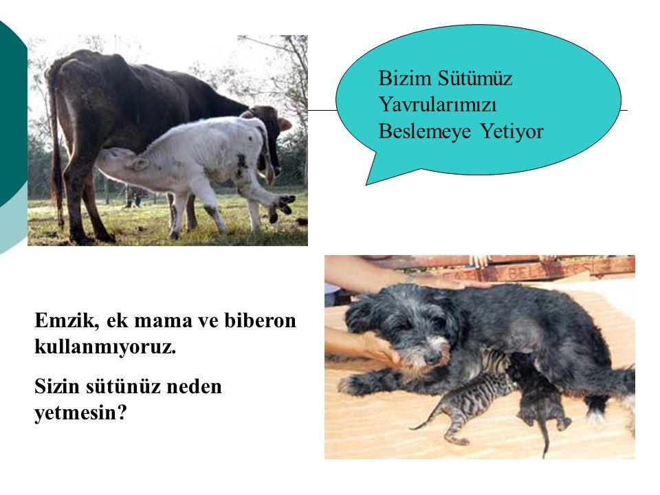 Emzik, ek mama ve biberon kullanmıyoruz. Sizin sütünüz neden yetmesin? Bizim Sütümüz Yavrularımızı Beslemeye Yetiyor