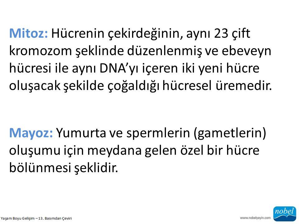 Mitoz: Hücrenin çekirdeğinin, aynı 23 çift kromozom şeklinde düzenlenmiş ve ebeveyn hücresi ile aynı DNA'yı içeren iki yeni hücre oluşacak şekilde çoğ