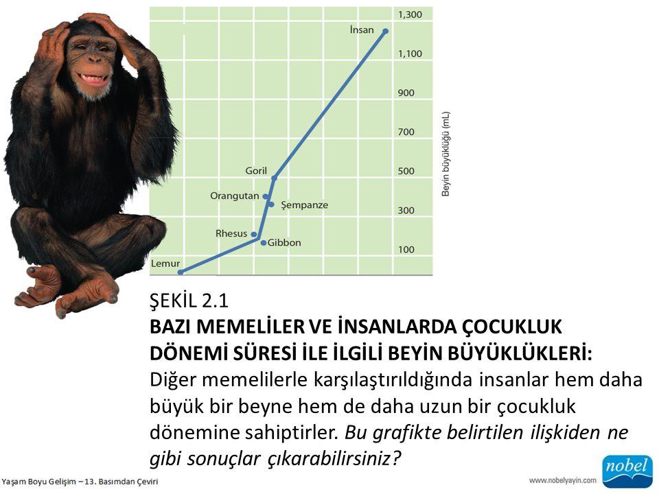 b) Evrimsel Psikoloji Evrimsel Gelişim Psikolojisi: Son yıllarda insan gelişimini anlamak için evrimsel psikoloji kavramlarının kullanılmasına gösterilen ilgi artmıştır (Bjorklund, 2006, 2007).