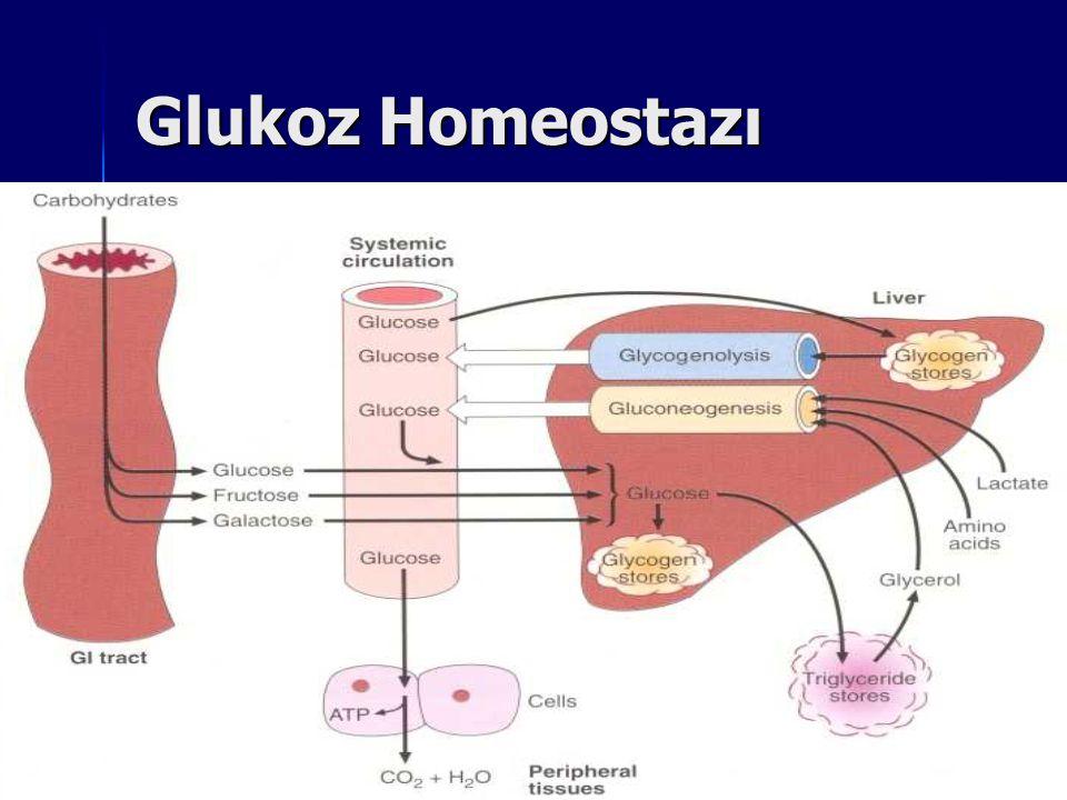 Kan Glukoz Konsantrasyonunun Düzenlenmesi Kanda glukoz konsantrasyonu hormonlar tarafından düzenlenir.