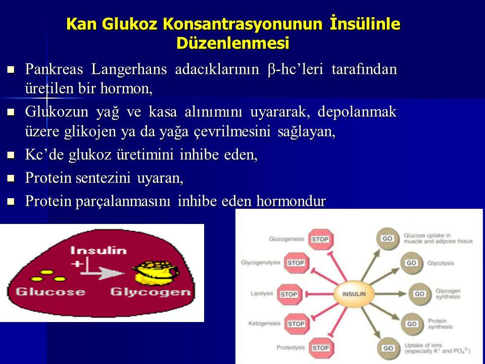 Kan Glukoz Konsantrasyonunun İnsülinle Düzenlenmesi Pankreas Langerhans adacıklarının β-hc'leri tarafından üretilen bir hormon, Pankreas Langerhans ad