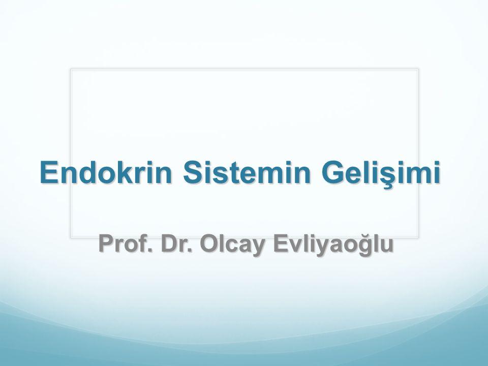 Adrenal bez gelişimi Embroyoloji Mezoderm........adrenal korteks Ektoderm.........adrenal medulla 5-6 hft fetal adrenal kortekste Dış definit zon (glukokortikoid ve mineralokortikoid) İç fetal zon (androjenik prekursorler)