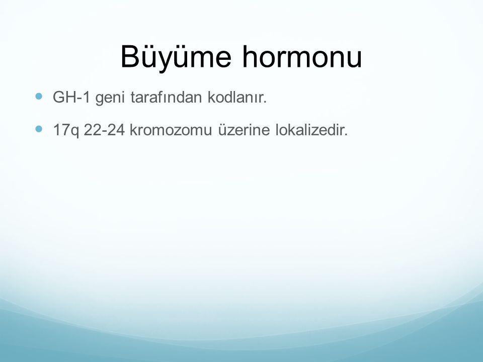 Büyüme hormonu GH-1 geni tarafından kodlanır. 17q 22-24 kromozomu üzerine lokalizedir.