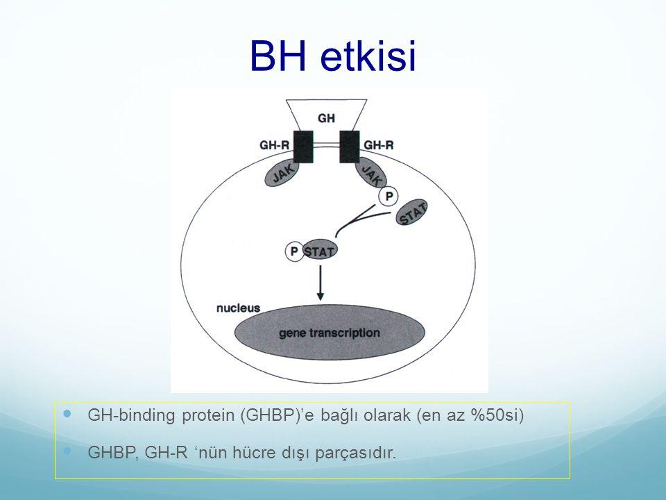 BH etkisi GH-binding protein (GHBP)'e bağlı olarak (en az %50si) GHBP, GH-R 'nün hücre dışı parçasıdır.