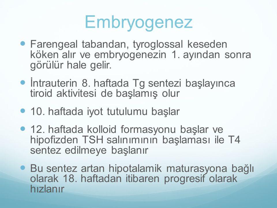 Embryogenez Farengeal tabandan, tyroglossal keseden köken alır ve embryogenezin 1. ayından sonra görülür hale gelir. İntrauterin 8. haftada Tg sentezi