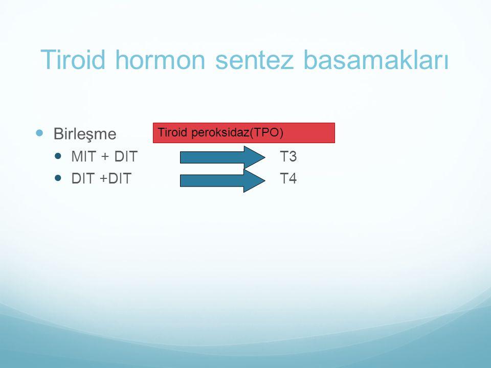 Tiroid hormon sentez basamakları Birleşme MIT + DIT T3 DIT +DITT4 Tiroid peroksidaz(TPO)
